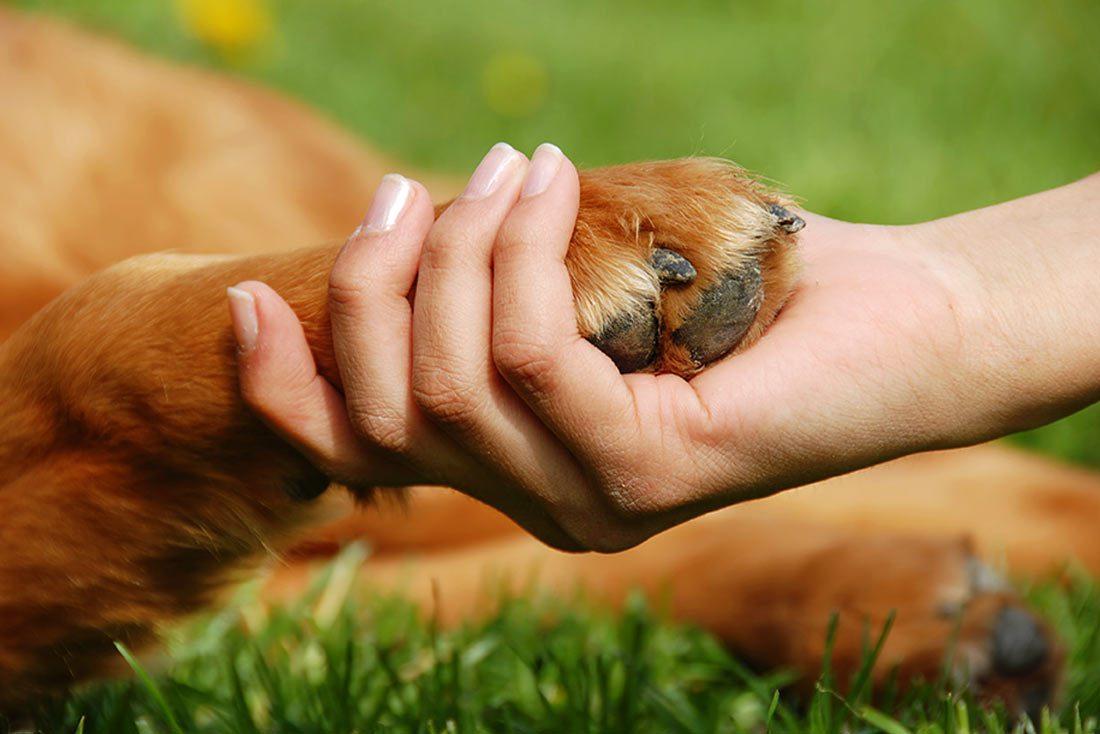 Het welzijn en gezondheid van uw dier staat bij ons voorop.